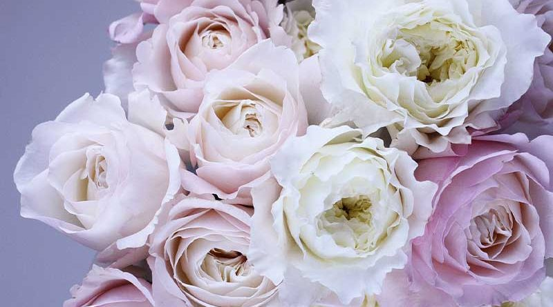 16 Beautiful Flowers in the World